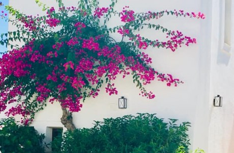בתי המלון הזולים והטובים ביוון